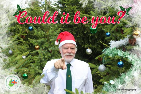 british christmas tree growers association - British Christmas